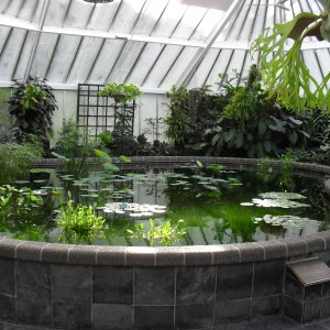 waterproofing fish ponds